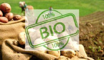 La patata Bio